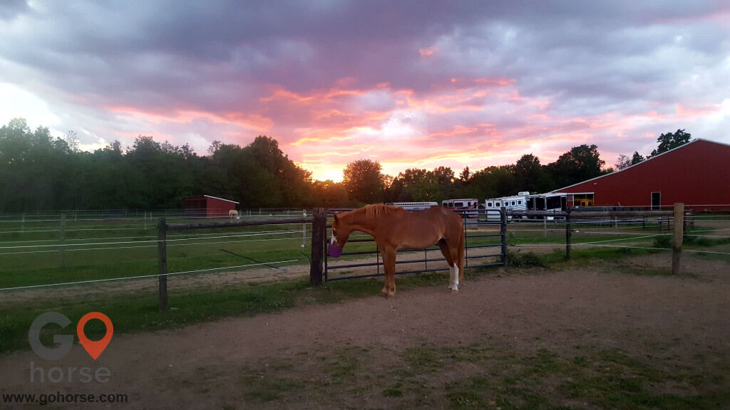 TNT Farms Horse stables in Hickory Corners MI 7