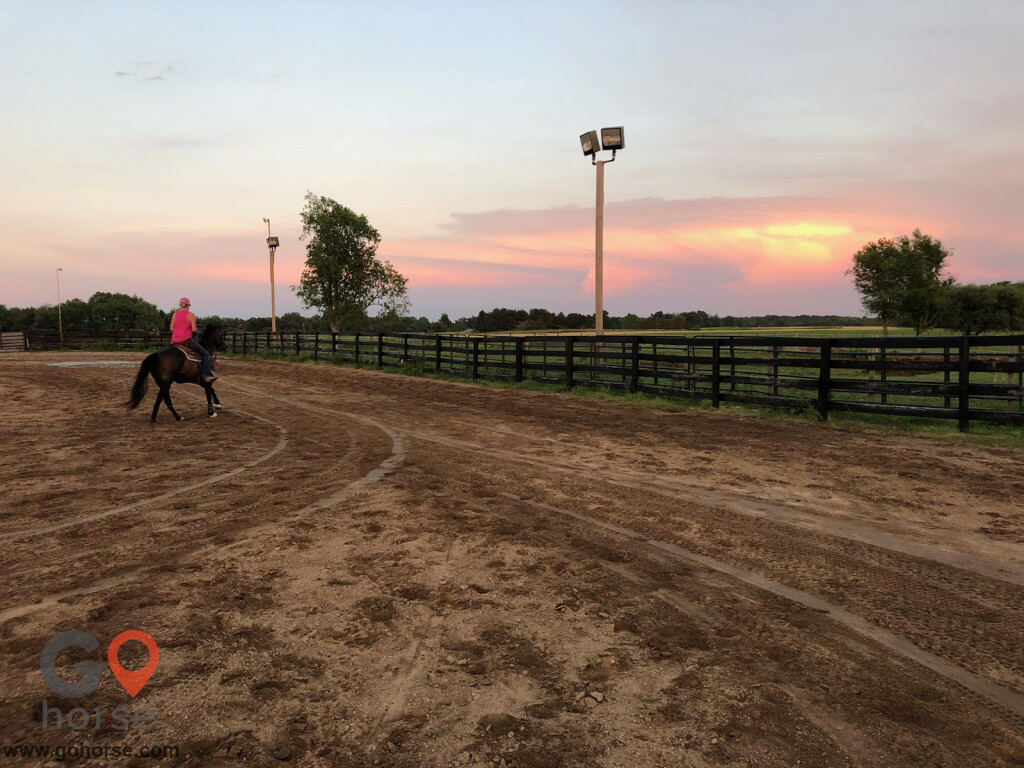 TNT Farms Horse stables in Hickory Corners MI 5
