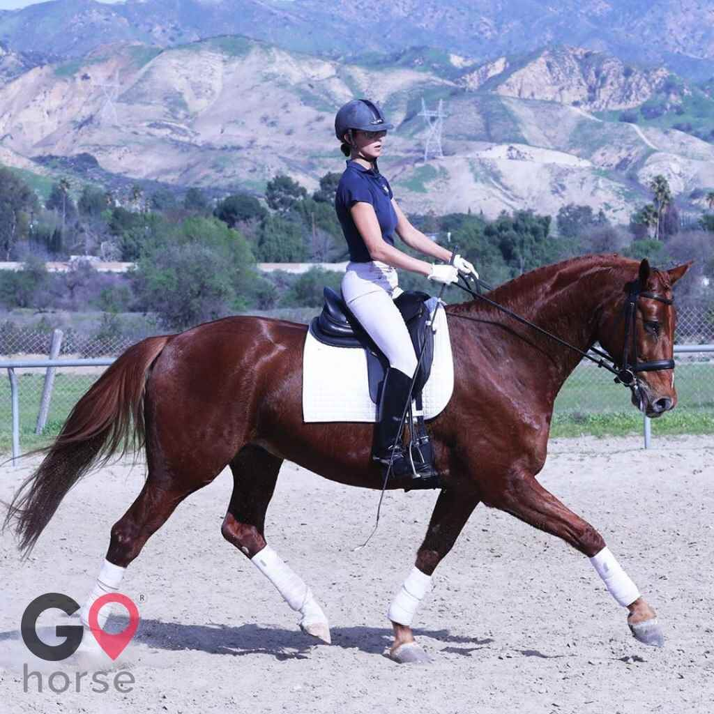 Blue Rose Equestrian @ Onden River Ranch Horse stables in Moorpark CA 23