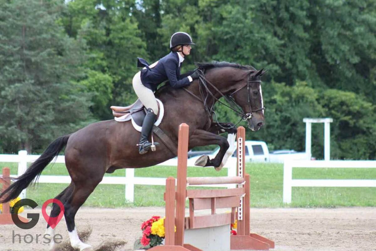 White Brook Farm Horse stables in Zionsville IN 8