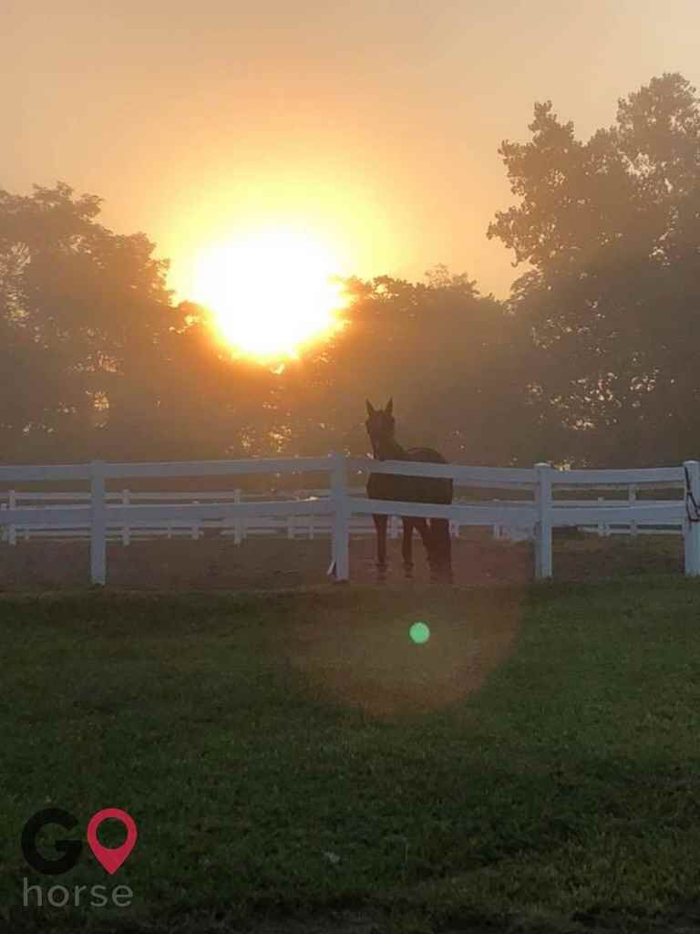 Saddle ridge riding center | Horse Stables in Franklin ...