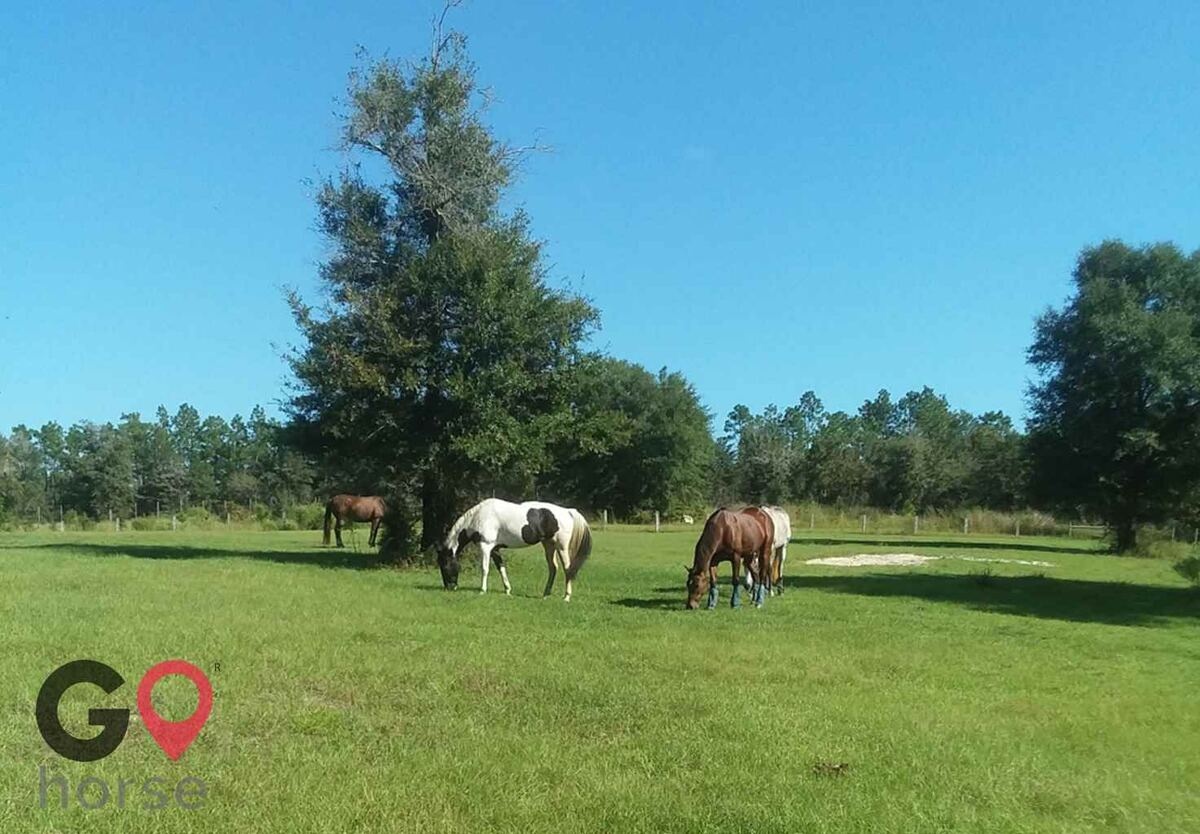 Stormwynd Equestrian Center Horse stables in Defuniak Springs FL 2