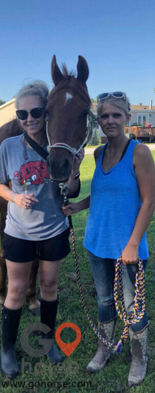 Bella Storms Equestrian Center. Horse stables in Fayetteville AR 8