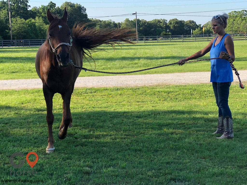 Bella Storms Equestrian Center. Horse stables in Fayetteville AR 11