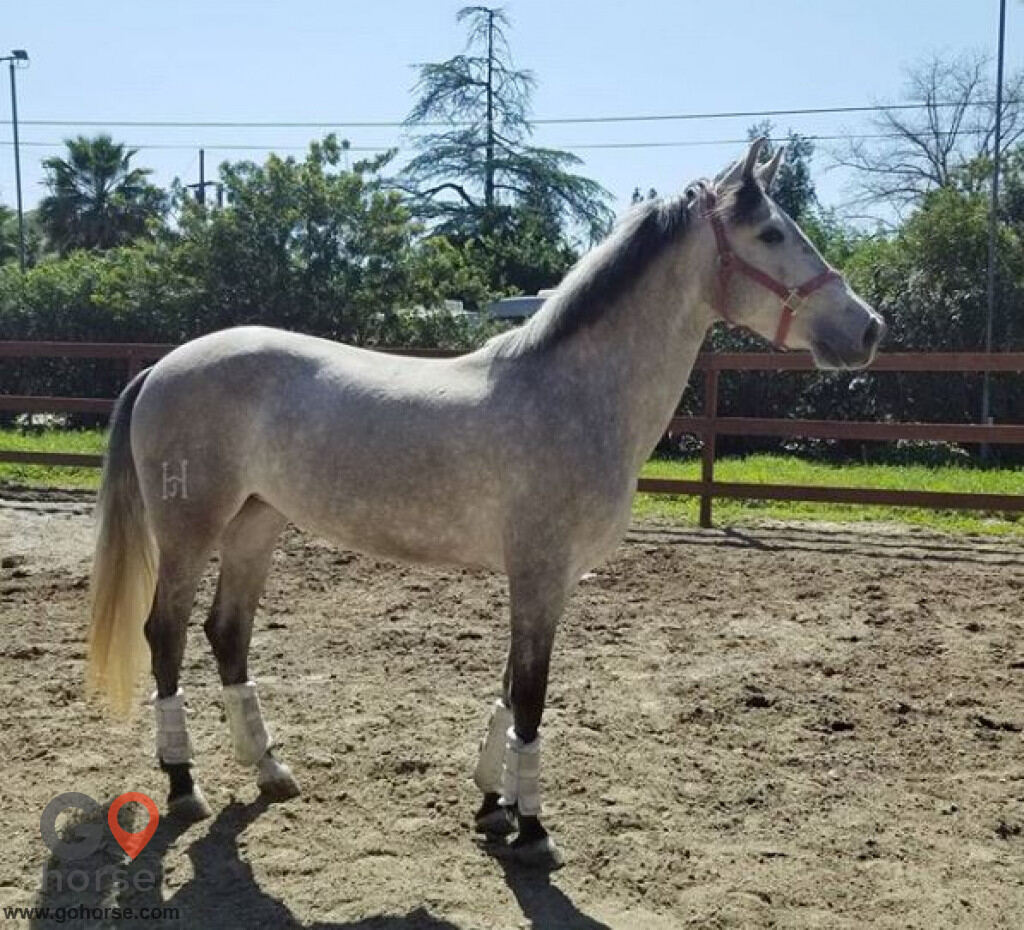 Fortissimo Farm Horse stables in Shadow Hills CA 3