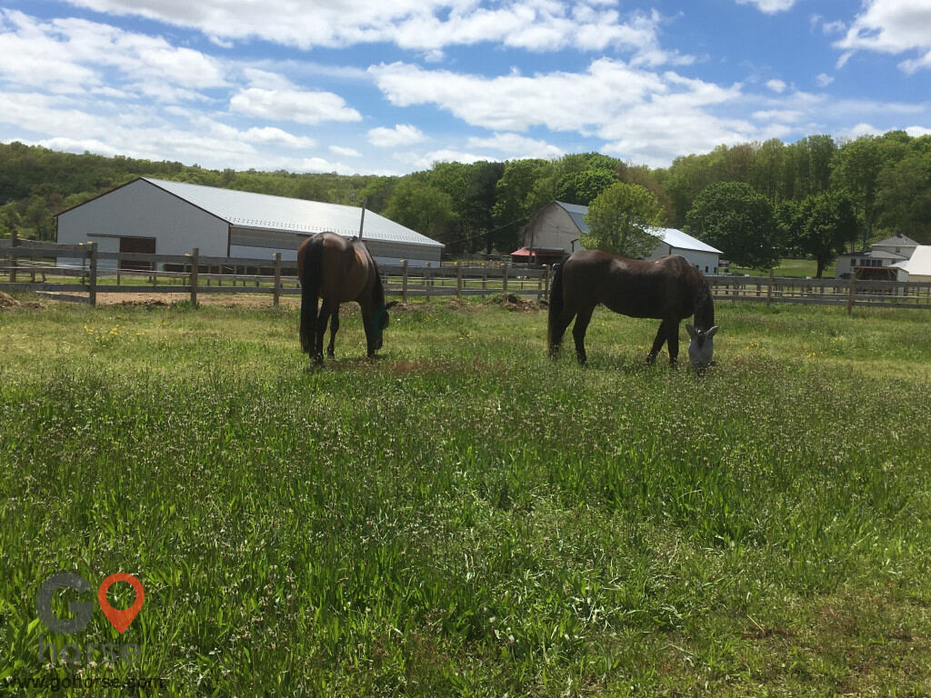 Bear Paw Barn Horse stables in Middletown CT 3