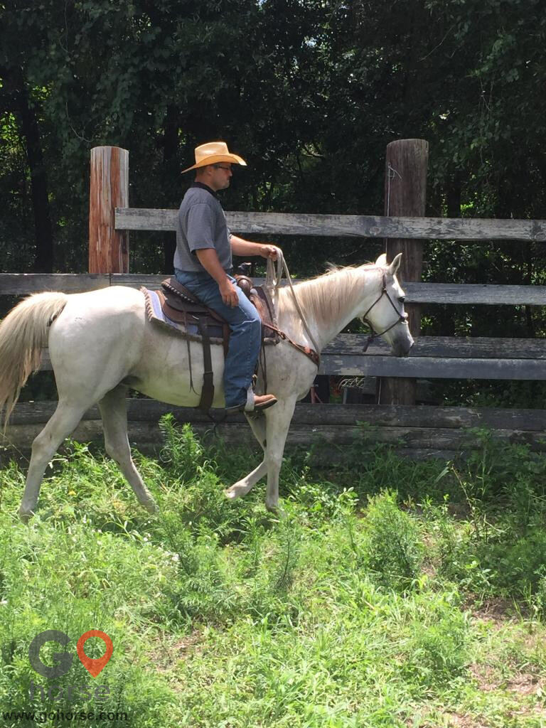Diamond Z Horse Trimming & Training LLC Horse stables in Hawthorne FL 3