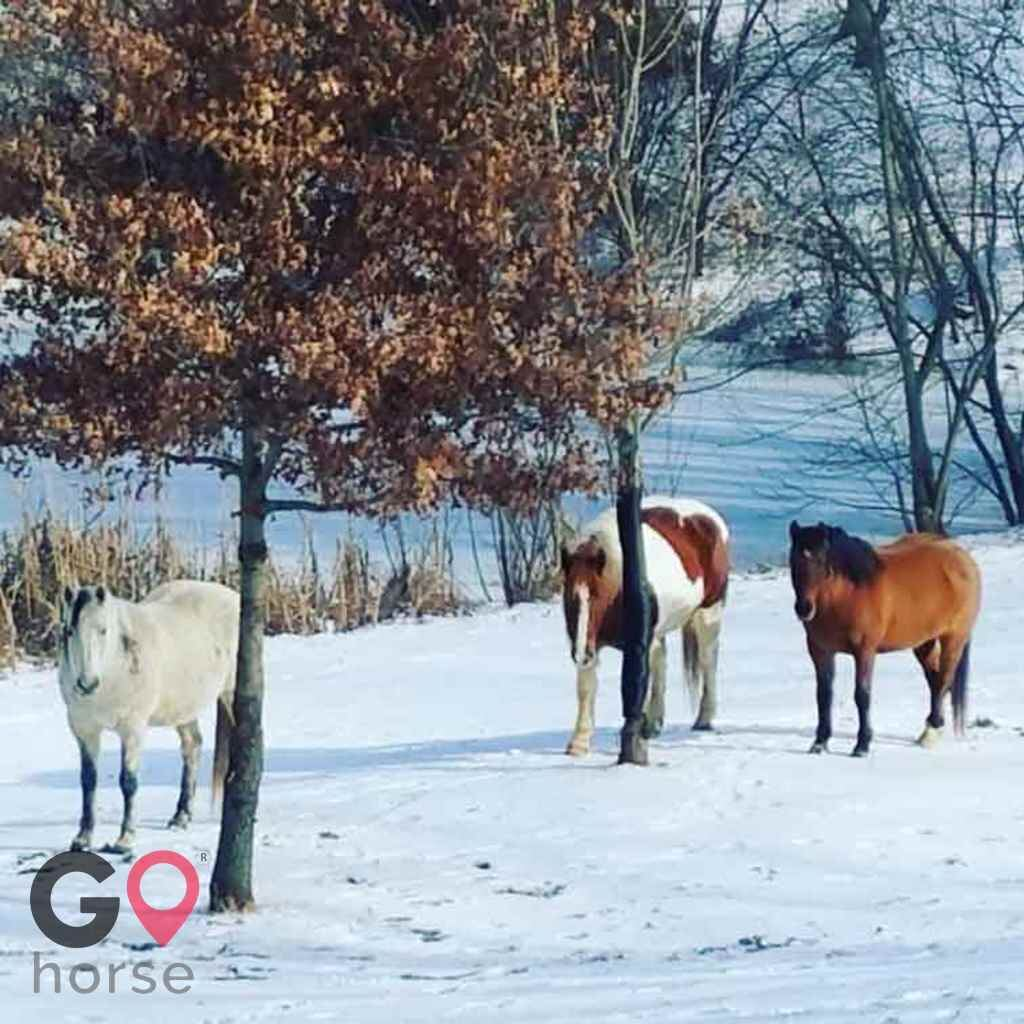 First Farm Inn Horse stables in Petersburg KY 15