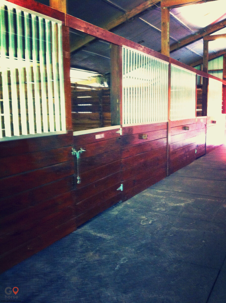 Halvorsrod Farm Horse stables in Wellington FL 7