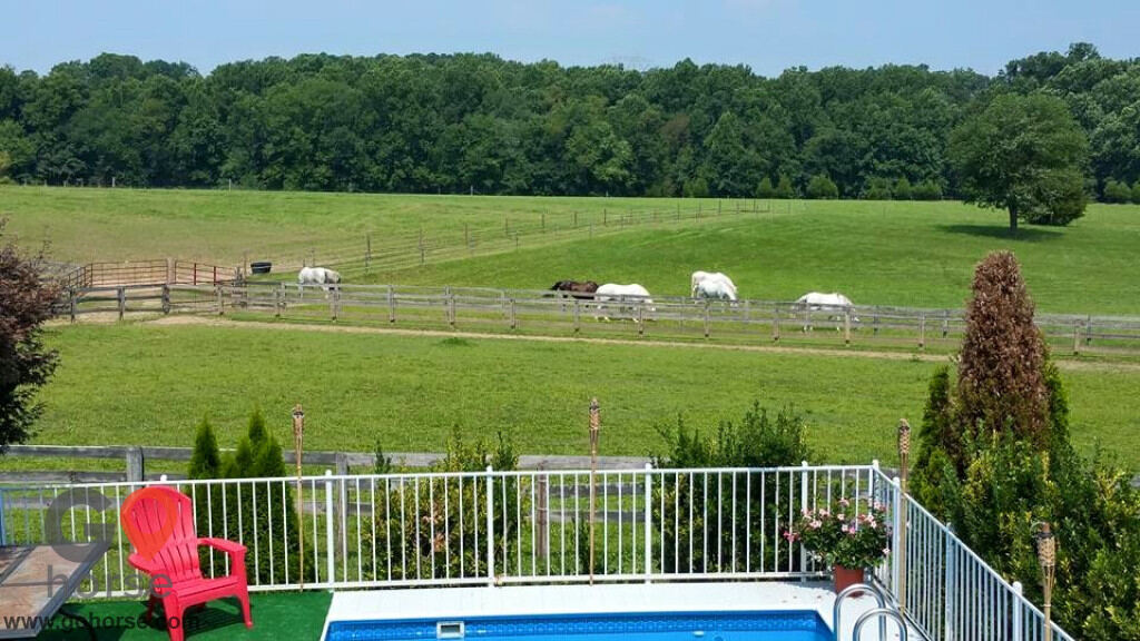 Spring Fever Farm Horse stables in Mt Airy MD 3