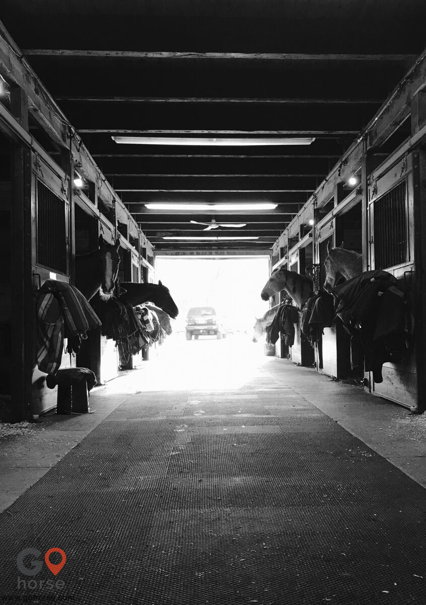 Crystal Equine Horse stables in Scituate MA 6