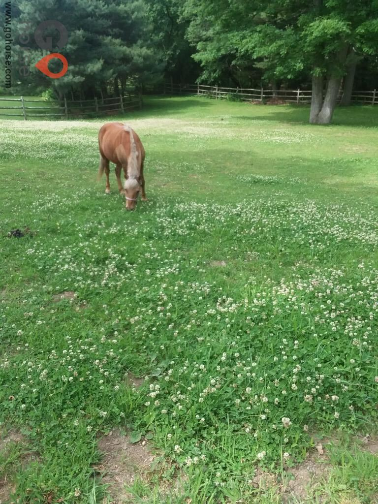 Emerald Equine Horse stables in Wrentham MA 2