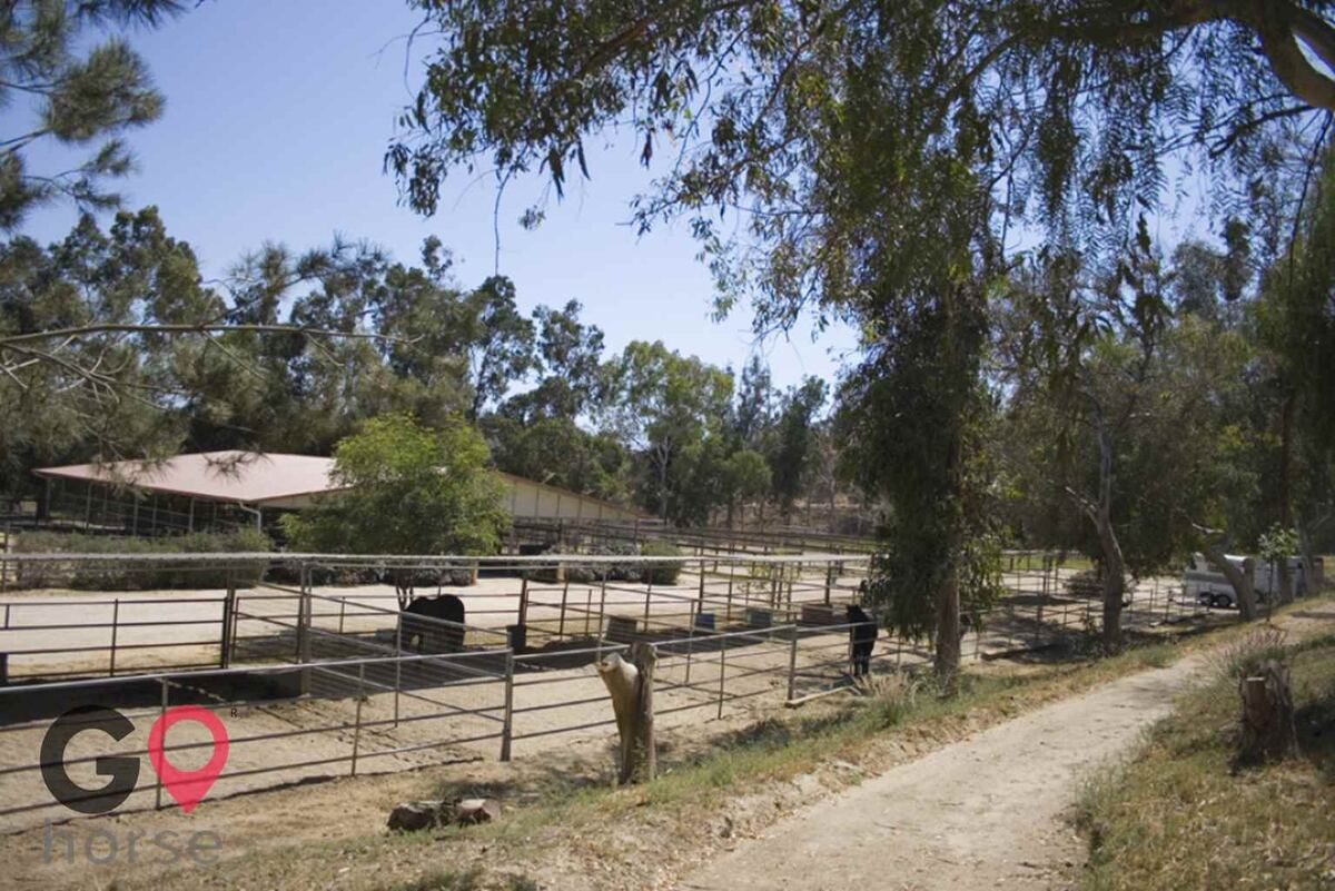 Blue Rose Equestrian @ Onden River Ranch Horse stables in Moorpark CA 12