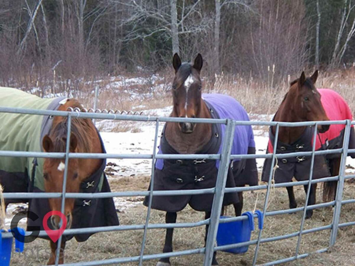Goose River Farm Horse stables in Swanville ME 4