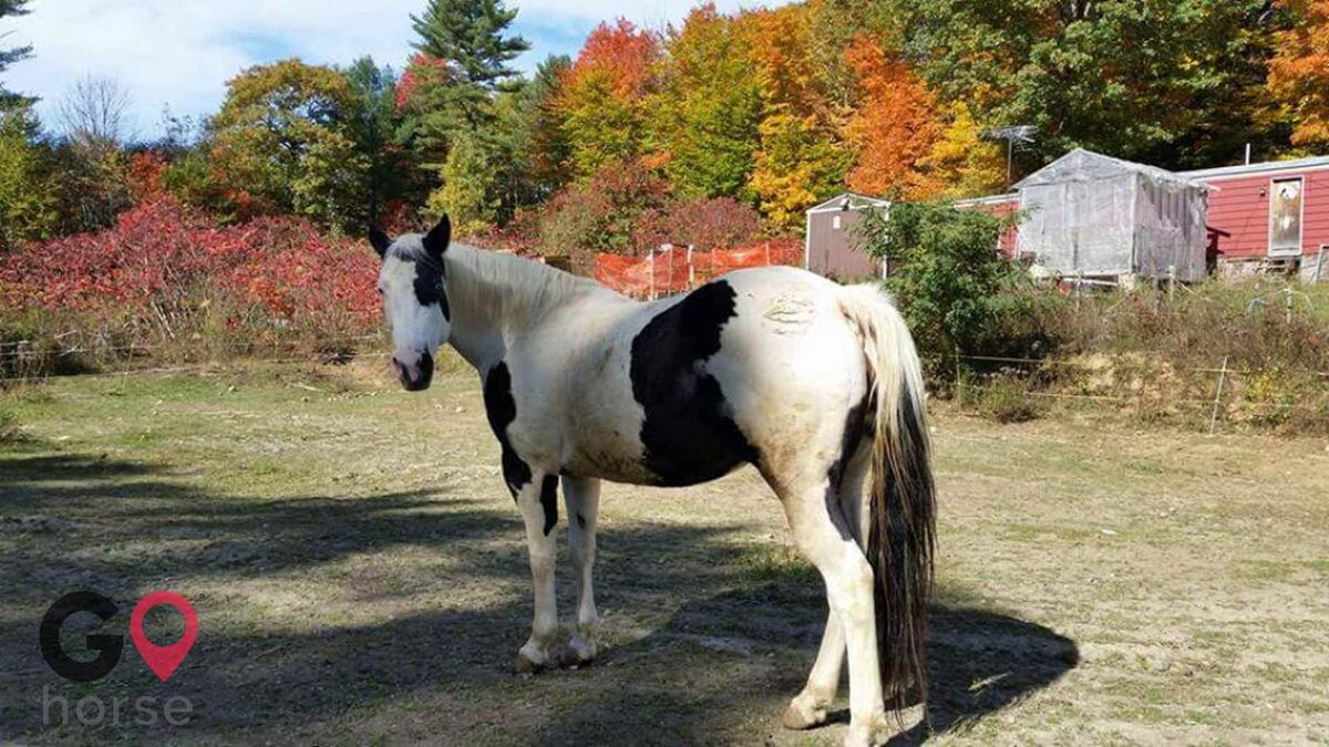 H&H Pony Farm Horse stables in West Gardiner ME 3