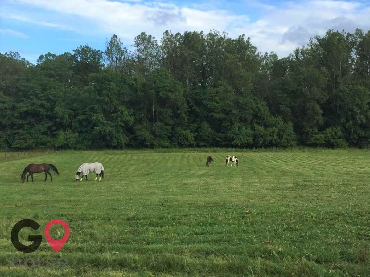 White Brook Farm Horse stables in Zionsville IN 5