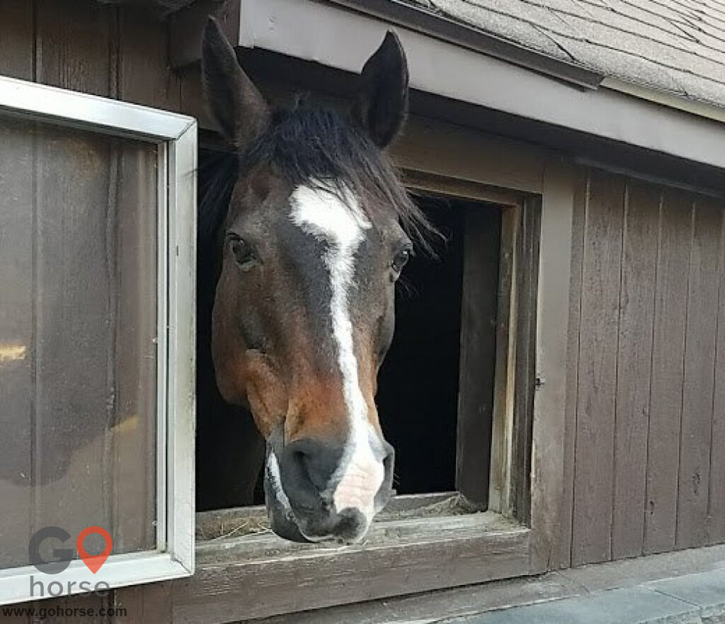 Tucker-Brook farm Horse stables in Milford CT 2