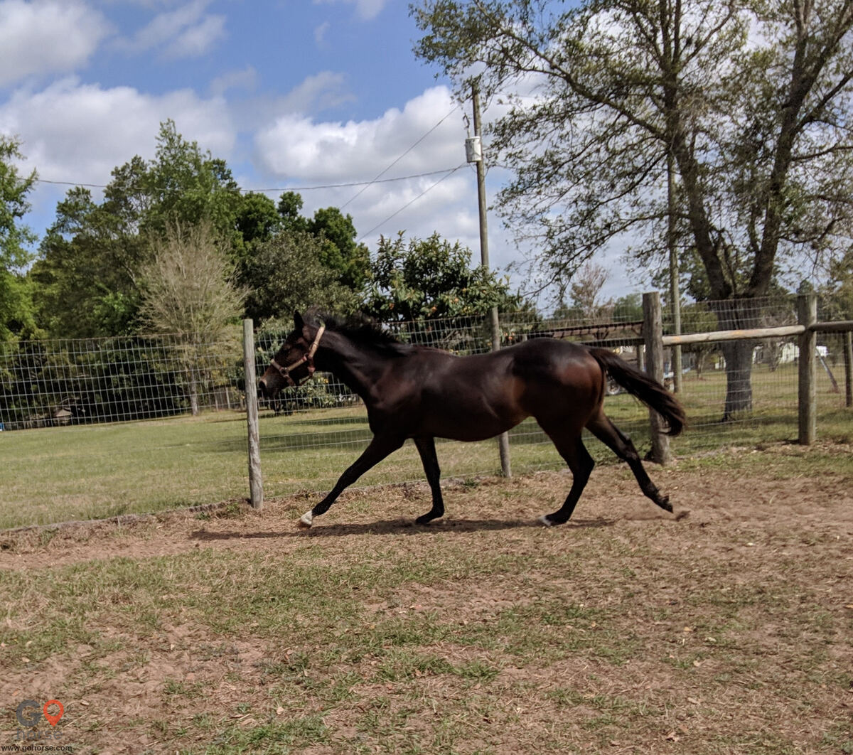 Good E Nuff Farms Horse stables in Dade City FL 6