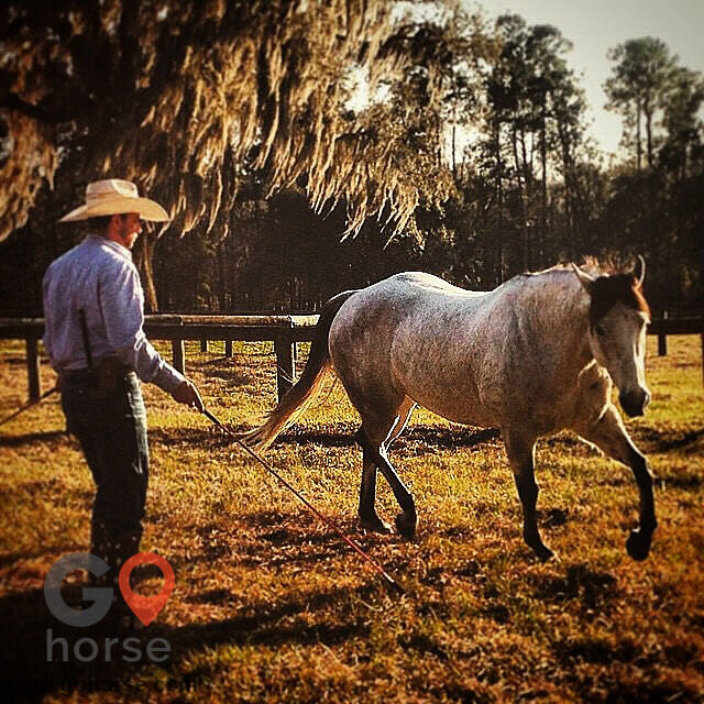 Pear Tree Ranch Horse stables in Citra FL 22