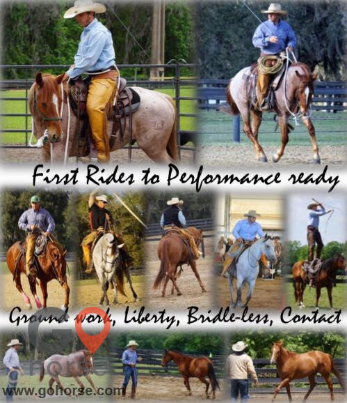 Pear Tree Ranch Horse stables in Citra FL 20