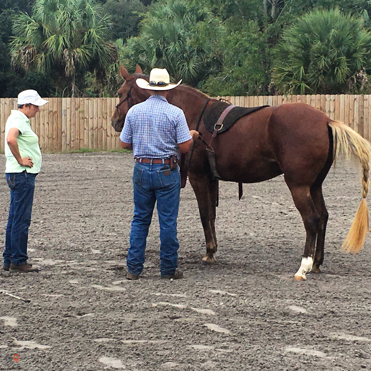 Pear Tree Ranch Horse stables in Citra FL 26