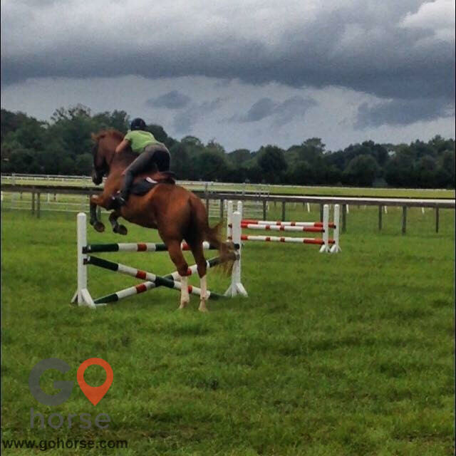 Pear Tree Ranch Horse stables in Citra FL 21