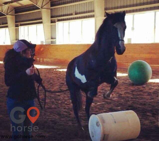 Pear Tree Ranch Horse stables in Citra FL 24