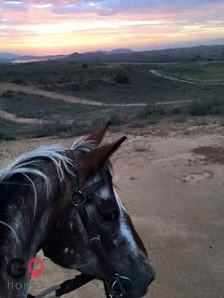 Trinity Therapeutic Riding Center Horse stables in Perris CA 7