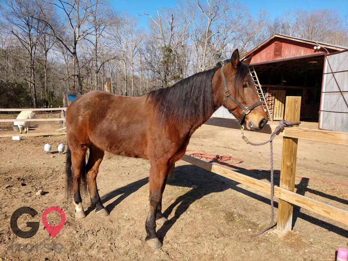 Bridlewood Stables Horse stables in Morris AL 1