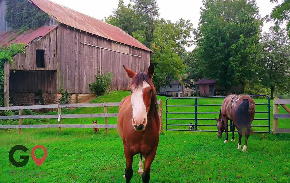 Mountain Pine Haven Horse stables in Myersville MD 3