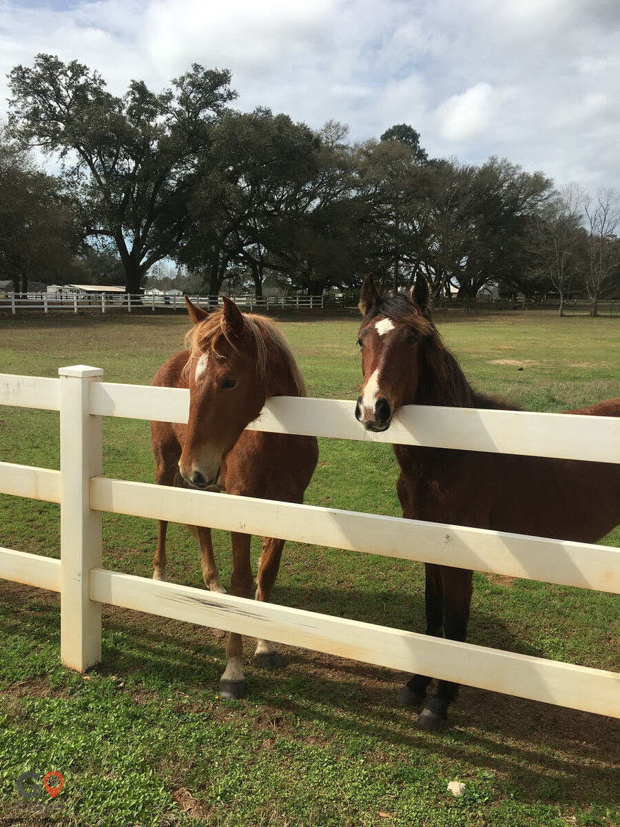 Amazing Gaits Equestrian Center Horse stables in Theodore AL 8
