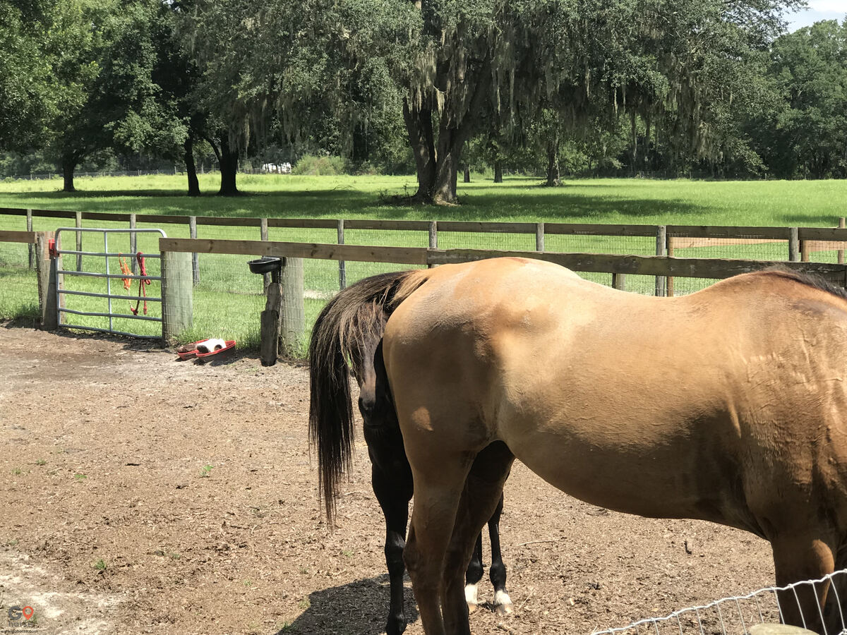 Old Wire Stables Horse stables in Fort White FL 21