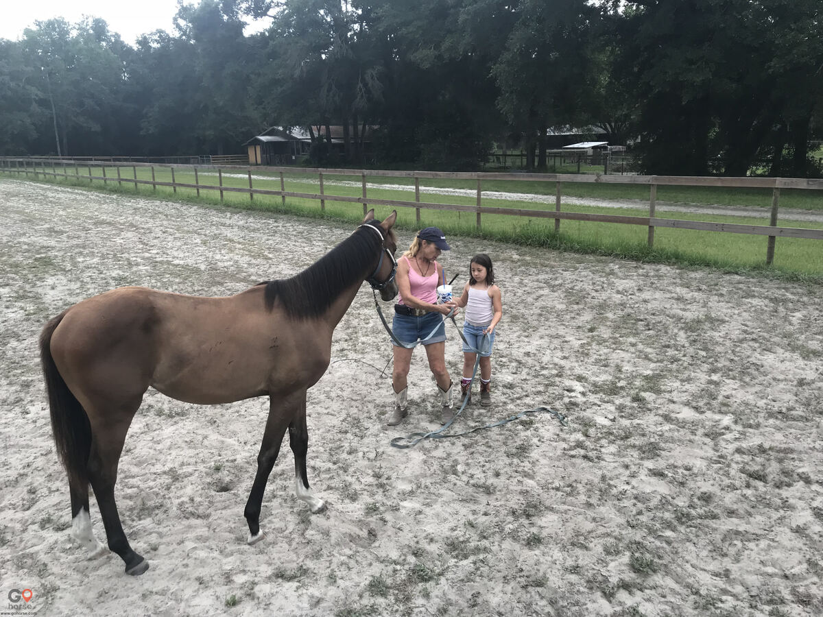 Old Wire Stables Horse stables in Fort White FL 18