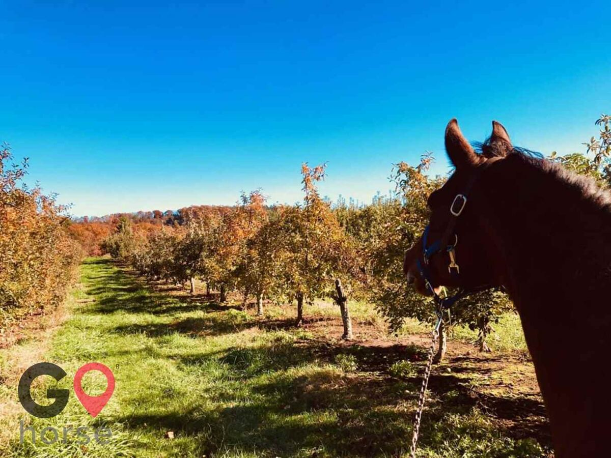 KB Equine Horse stables in Southington CT 5