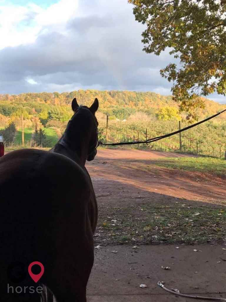 KB Equine Horse stables in Southington CT 4