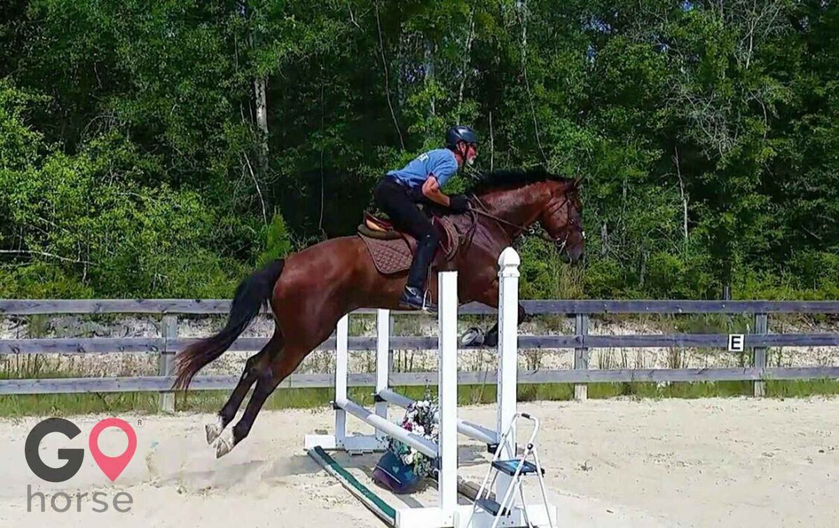 Stormwynd Equestrian Center Horse stables in Defuniak Springs FL 5
