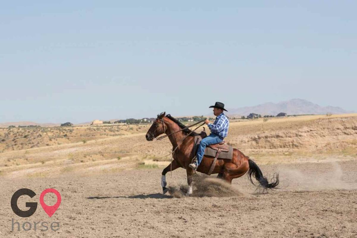 Nabel Horse Training Horse stables in Caldwell ID 3