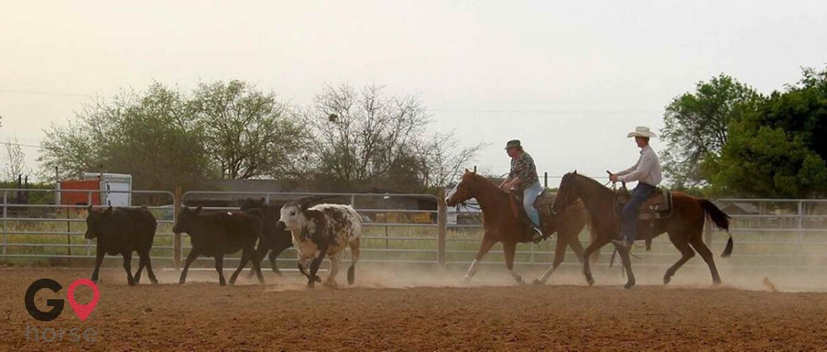Circle Lazy K Ranch Horse stables in Mariposa CA 1