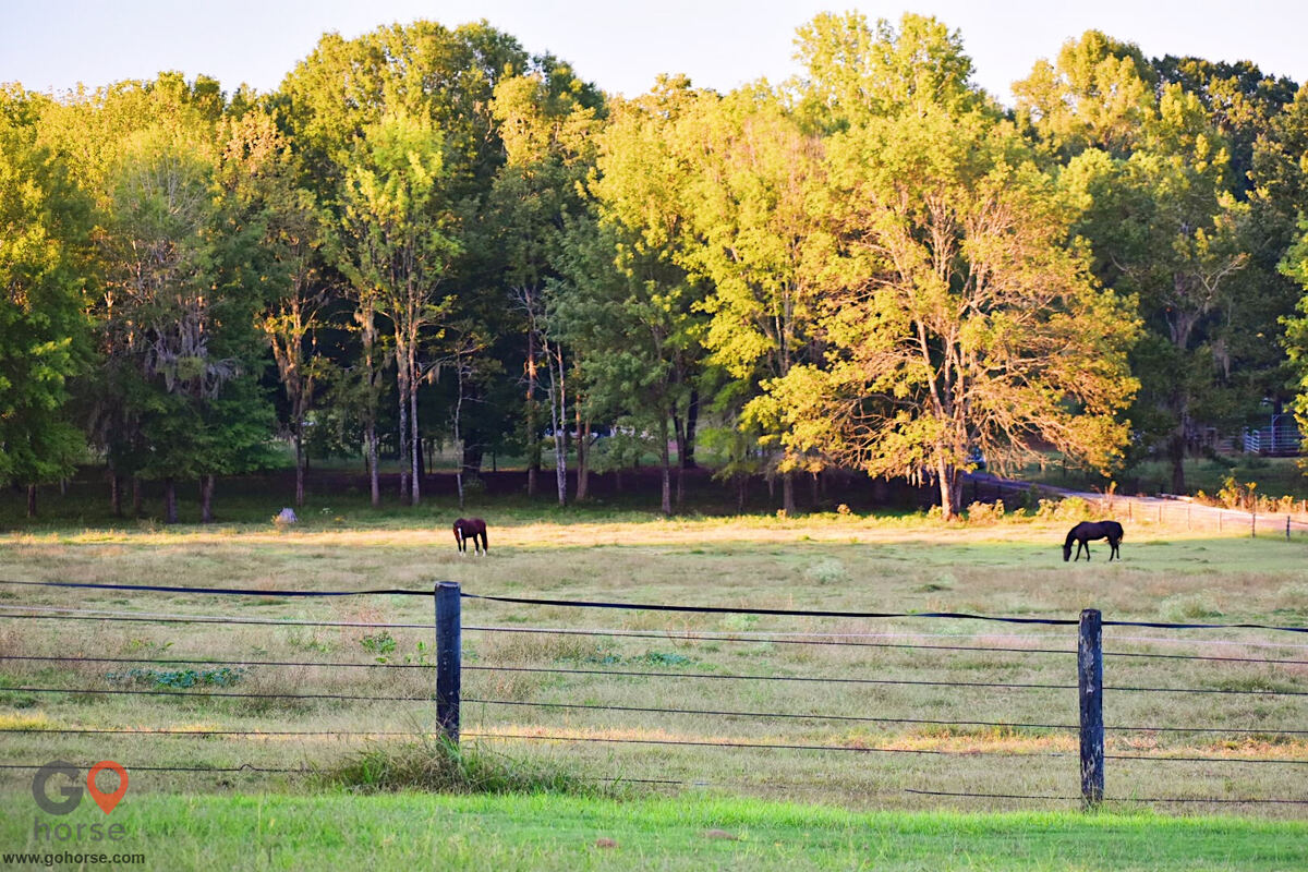 Seven Oaks Equestrian Center Horse stables in Pike Rd AL 13