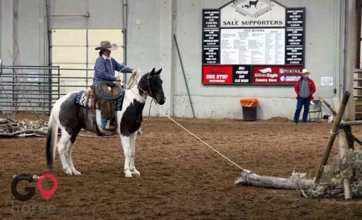 JF Bar Equine Services Horse stables in Marsing ID 5
