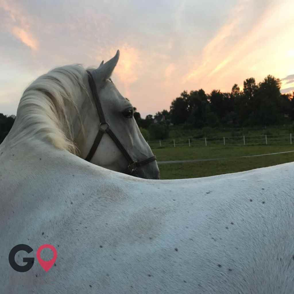 Four Winds Farm Horse stables in White Hall MD 3