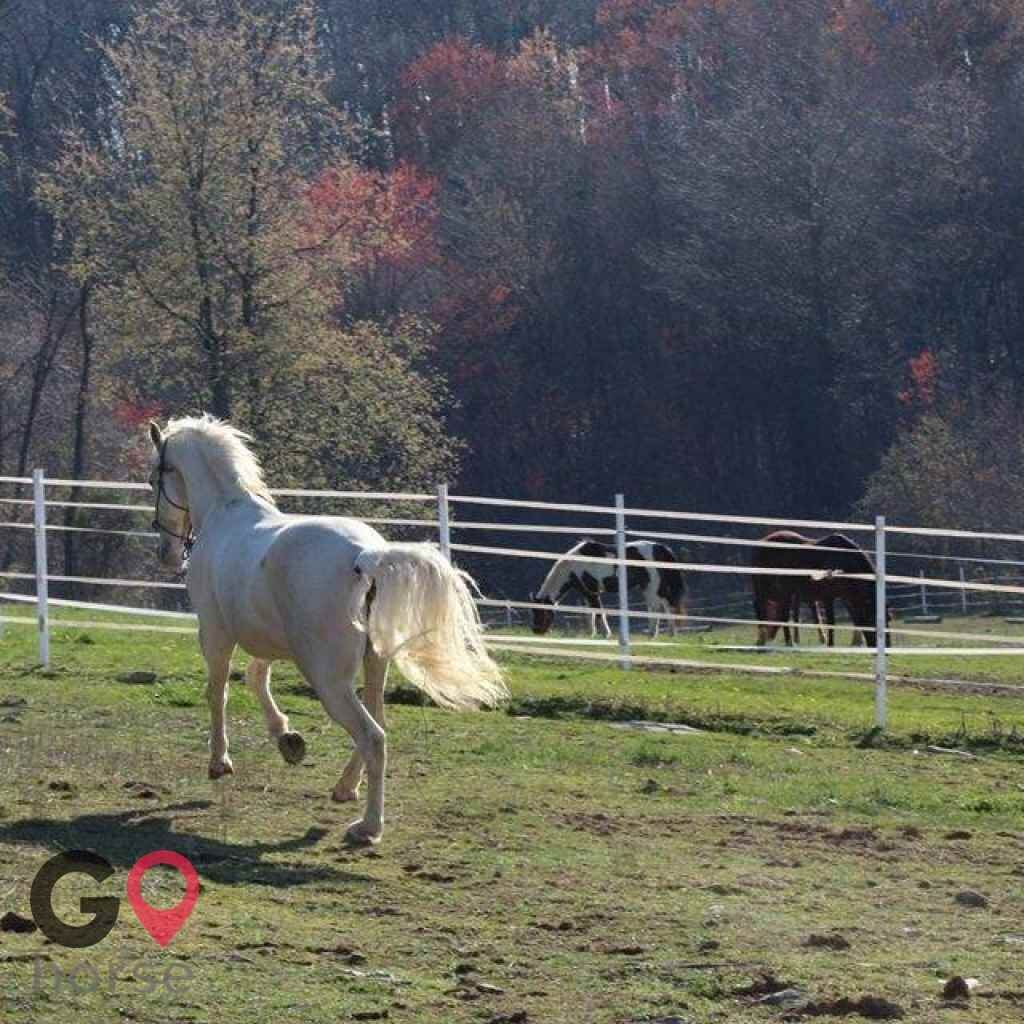 Four Winds Farm Horse stables in White Hall MD 2