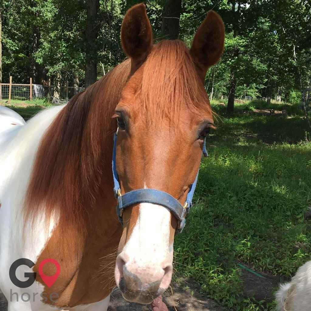 North Gait Horse Company Horse stables in Loon Lake Township MN 2