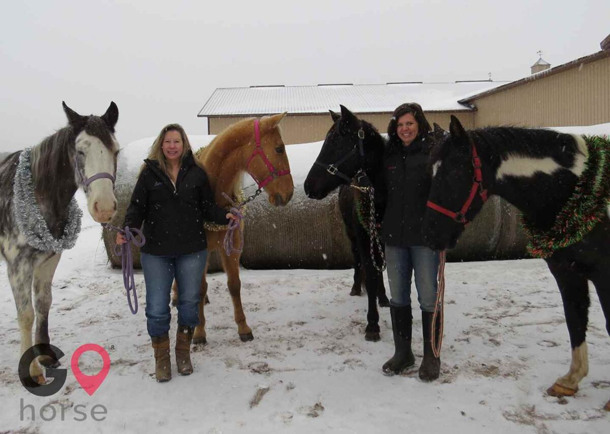 North Gait Horse Company Horse stables in Loon Lake Township MN 3