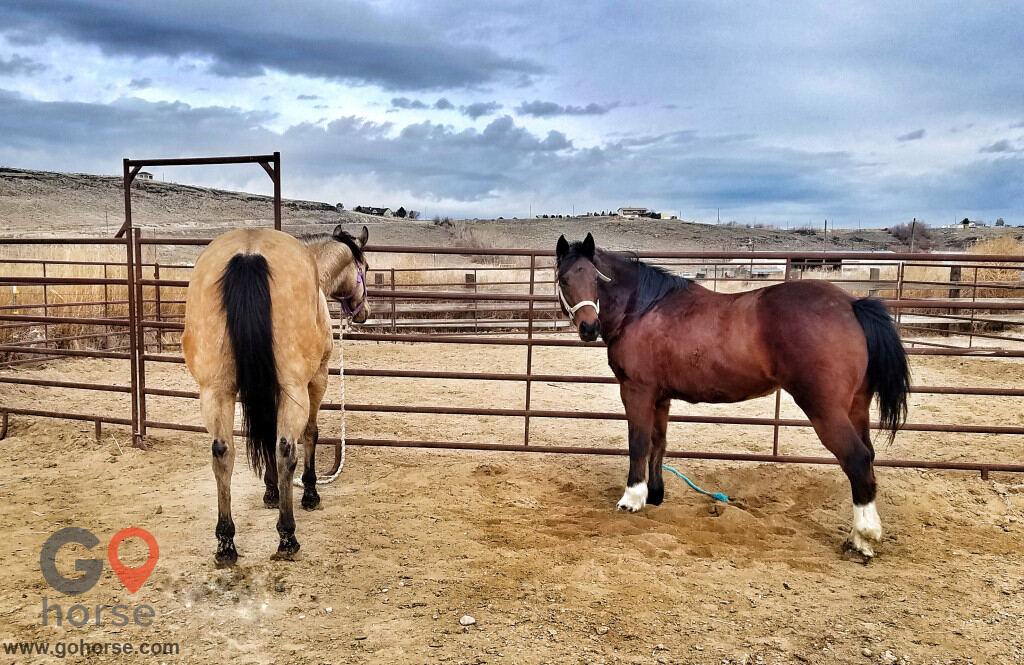 TLC Cattle & Horsemanship Horse stables in 91 Hill Rd ID 2