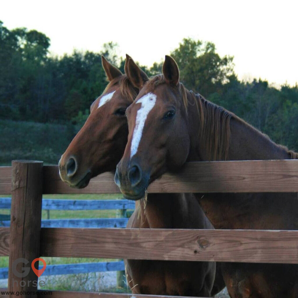 Idle Acres Horse stables in Park City KY 3