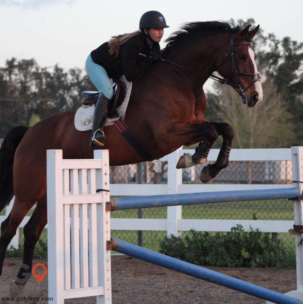 Rising Star Equestrian Horse stables in Norco CA 2