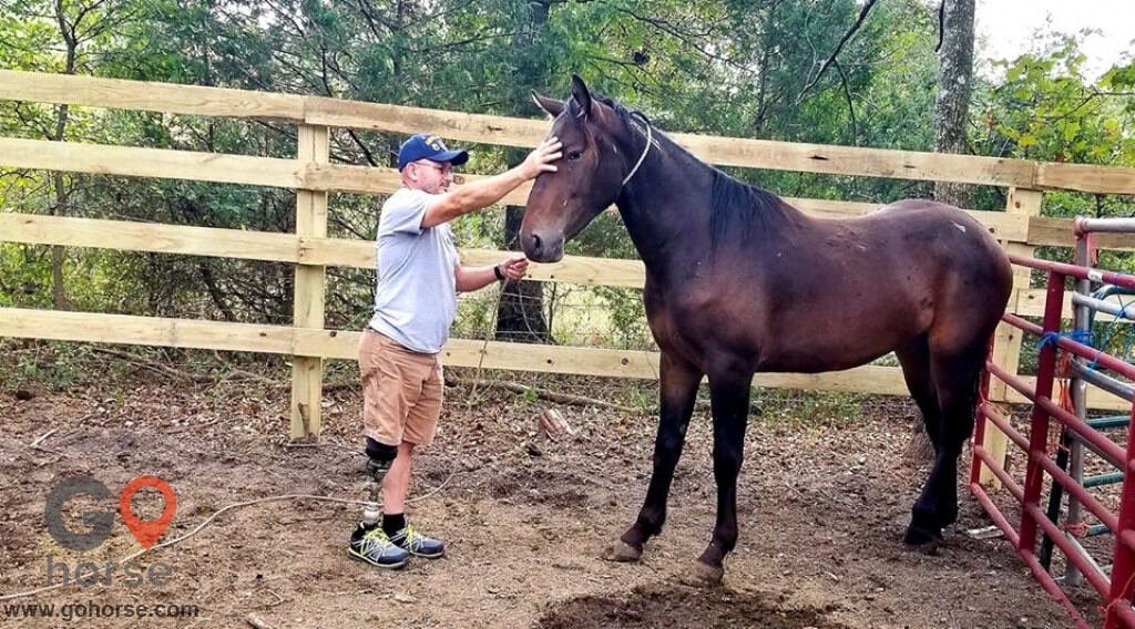 Horses & Heroes Transcend Equestrian Center Horse stables in Melbourne AR 2