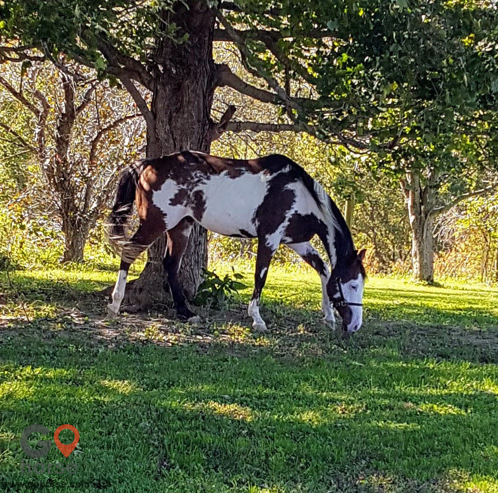 TreeTop  Stables Horse stables in Crittenden KY 10