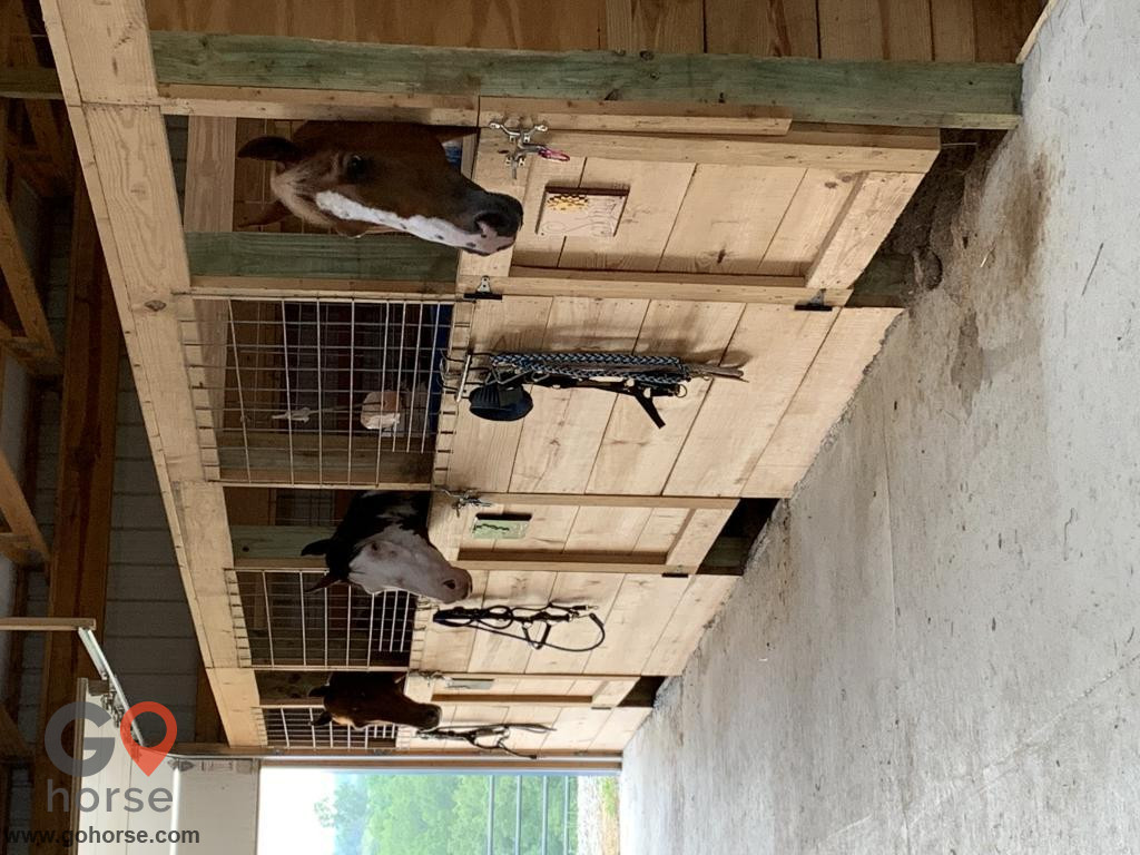 TreeTop  Stables Horse stables in Crittenden KY 2